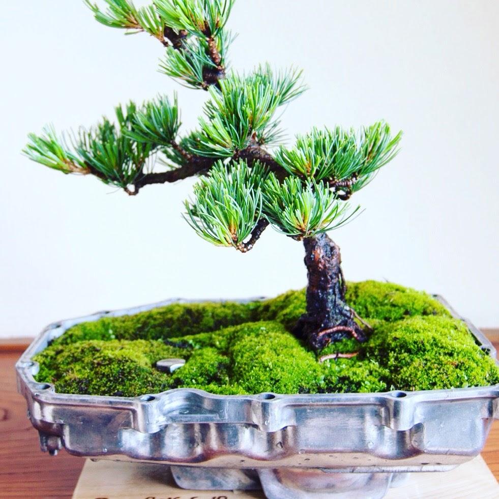 オイルパン盆栽 / Bonsai With Oil Pan